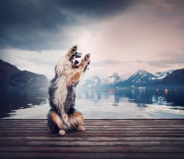 5c07def371644-BmfewMMBRjD-png__880 50 Beautiful Photos Of Dogs Taken By Czech Photographer Kristýna Kvapilová Photography Random