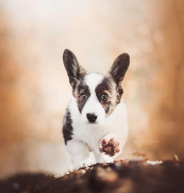 5c07def3cd0bc-BioznCchr0v-png__880 50 Beautiful Photos Of Dogs Taken By Czech Photographer Kristýna Kvapilová Photography Random