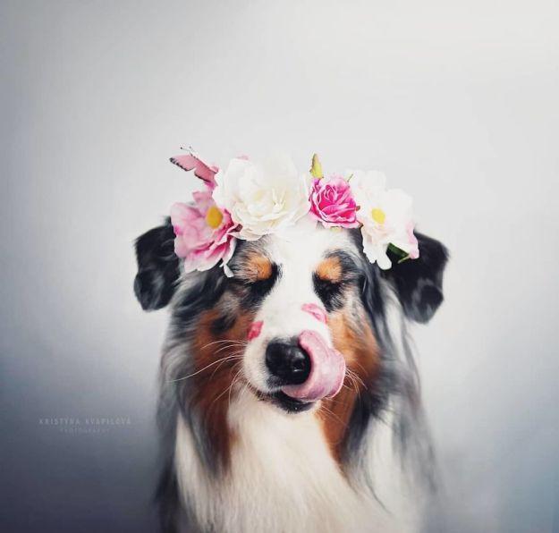 5c07def450778-BfLyIo5gbXA-png__880 50 Beautiful Photos Of Dogs Taken By Czech Photographer Kristýna Kvapilová Photography Random