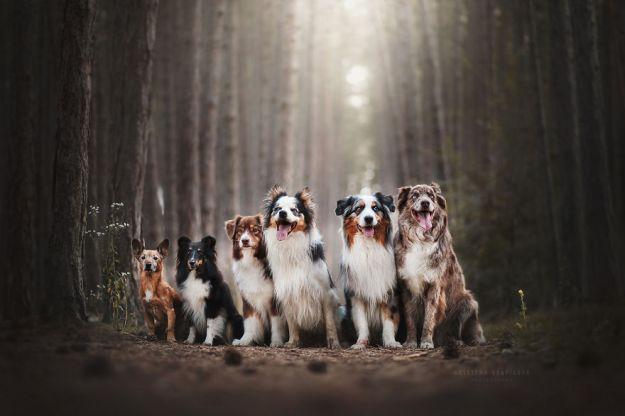 5c07def4ed22c-Mountain-crew-adventures-of-two-girls-and-four-dogs-5c00fda00564d__880 50 Beautiful Photos Of Dogs Taken By Czech Photographer Kristýna Kvapilová Photography Random