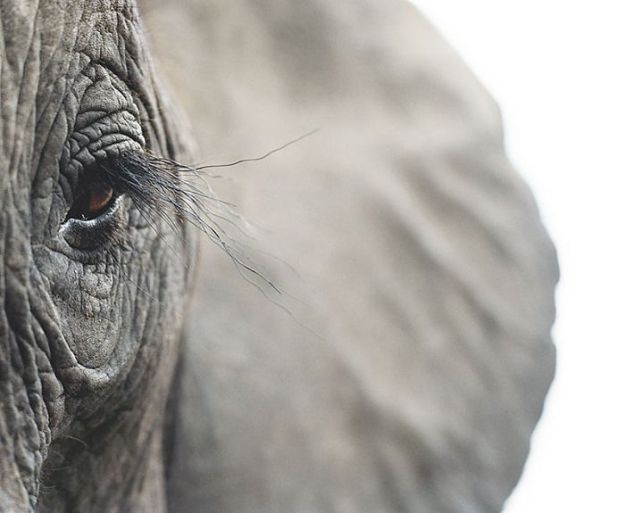 5c136d15bc096-endangered-animals-tim-flach-5a45f83a7b7ad__700 This Photographer Took Pictures Of Animals That Could Soon Be Extinct And This Might Be Your Last Chance To See Them Photography Random