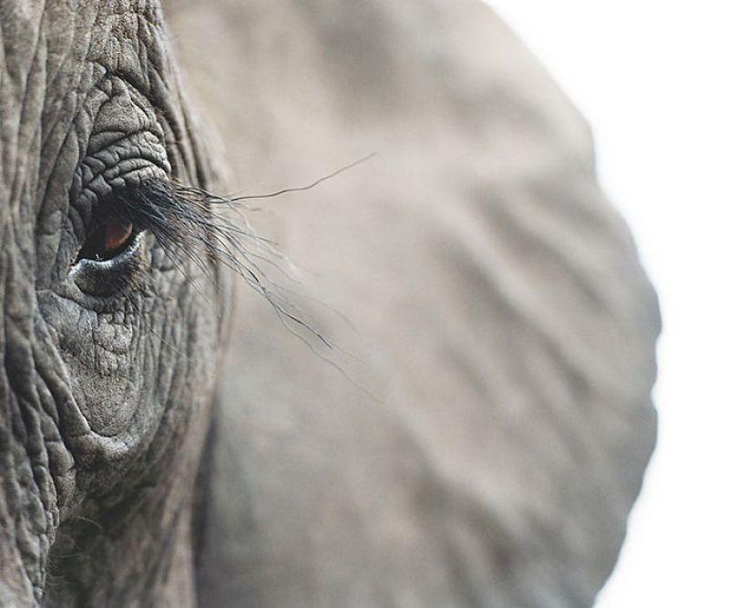 5c136d15bc096 endangered animals tim flach 5a45f83a7b7ad  700 - Fotos Incríveis de animais que podem em breve ser extintos