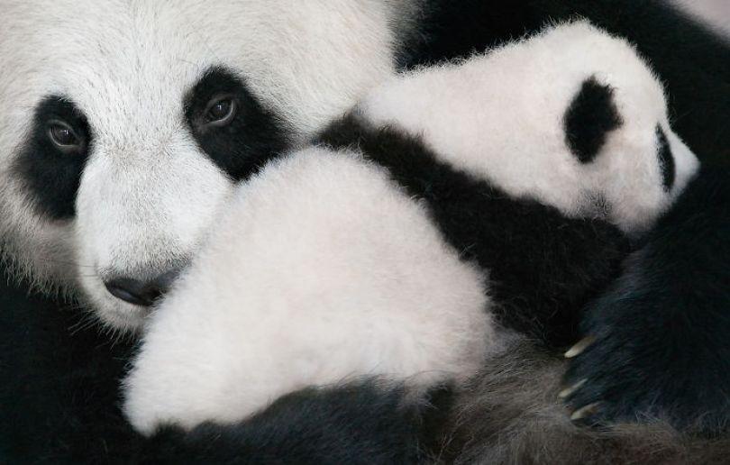 5c136d1729696 endangered animals tim flach 5a45fda75b183  700 - Fotos Incríveis de animais que podem em breve ser extintos