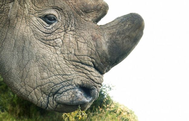 5c136d17e5030-endangered-animals-tim-flach-5a45f86a562bc__700 This Photographer Took Pictures Of Animals That Could Soon Be Extinct And This Might Be Your Last Chance To See Them Photography Random