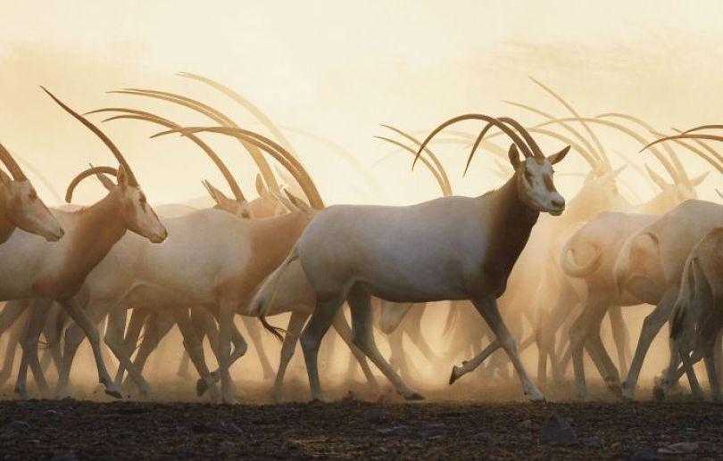 5c136d187019f endangered animals tim flach 5a45fac47e126  700 - Fotos Incríveis de animais que podem em breve ser extintos