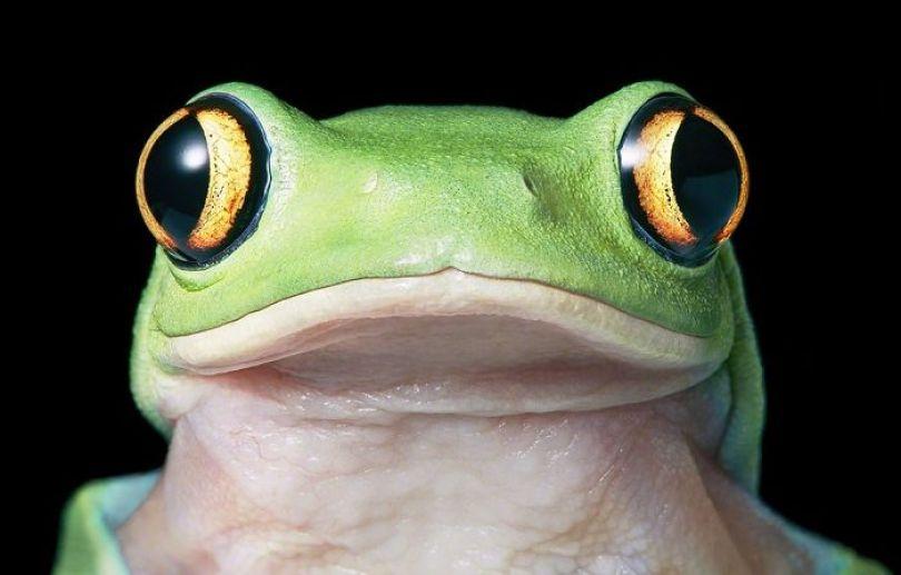 5c136d1949e02 endangered animals tim flach 5a45f3152b66d  700 - Fotos Incríveis de animais que podem em breve ser extintos