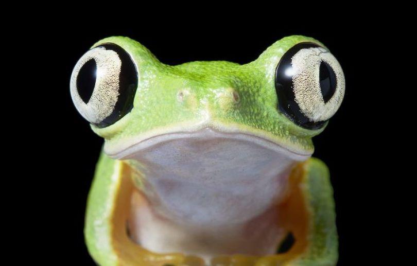 5c136d19bd204 endangered animals tim flach 5a45f3433c563  700 - Fotos Incríveis de animais que podem em breve ser extintos