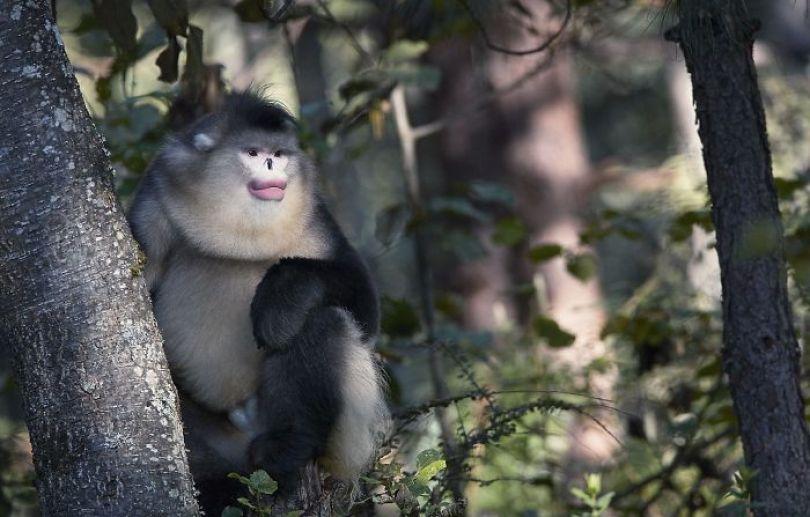 5c136d19d3773 endangered animals tim flach 5a45fe8507315  700 - Fotos Incríveis de animais que podem em breve ser extintos