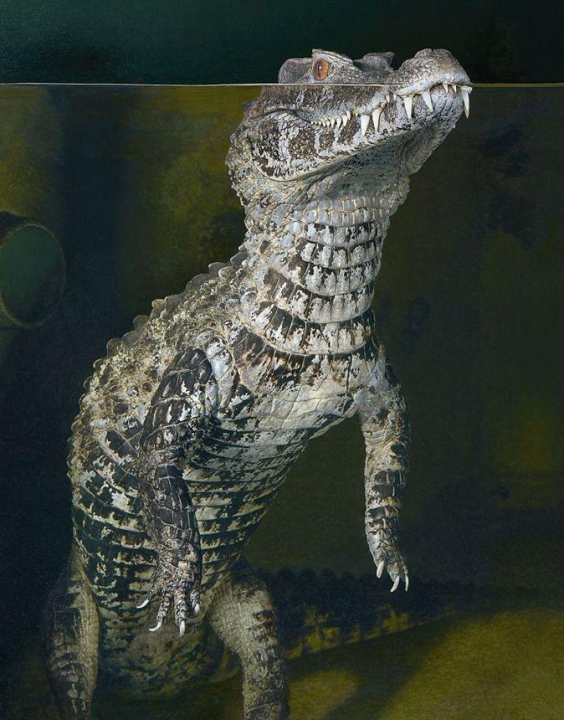 5c136d19f0634 Smooth Fronted Cayman 1254x1600 5a46035e1989e  700 - Fotos Incríveis de animais que podem em breve ser extintos