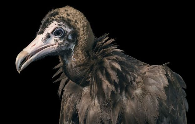 5c136d1a3d2ec-endangered-animals-tim-flach-5a45f69349927__700 This Photographer Took Pictures Of Animals That Could Soon Be Extinct And This Might Be Your Last Chance To See Them Photography Random