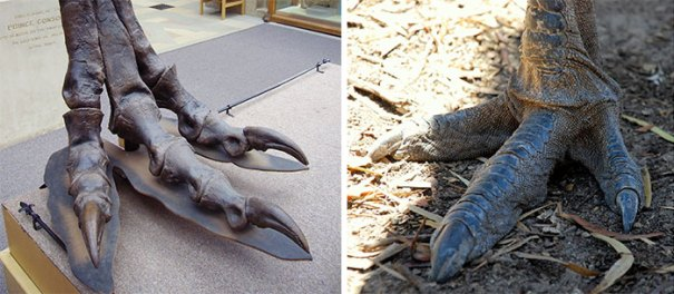 5c3319593e0e2 interesting thing comparisons 5 5c2f2f11a9710  700 - 50 imagens incríveis com as comparações mais interessantes de todos os tempos!