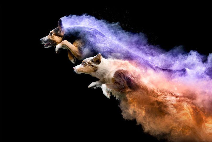 5c41e16ce21e9 lyric and gemma 5c3f4b23659d2  880 - Fotógrafo jogou pó colorido em cachorros e as fotos você precisa ver