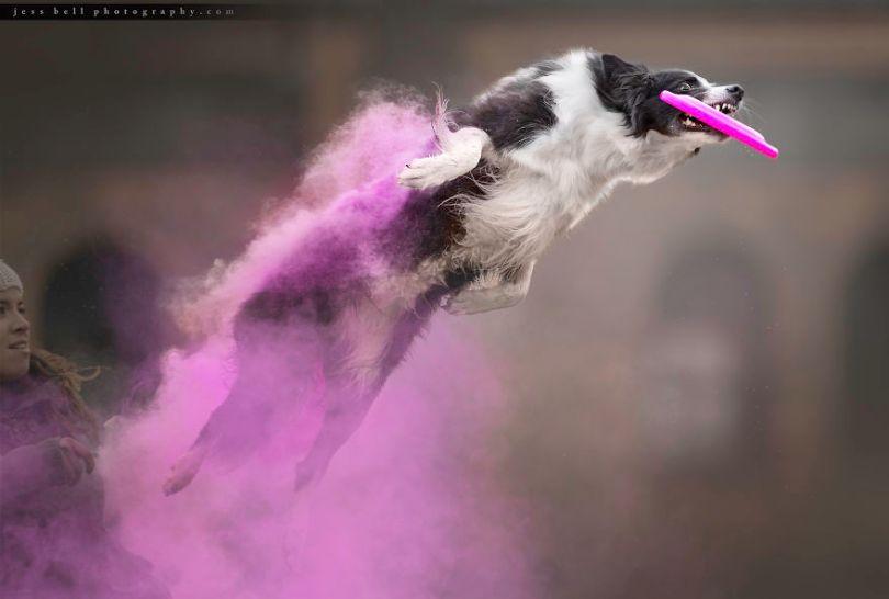 5c41e16e1d16f lottie 1 5c3f4b218d91e  880 - Fotógrafo jogou pó colorido em cachorros e as fotos você precisa ver