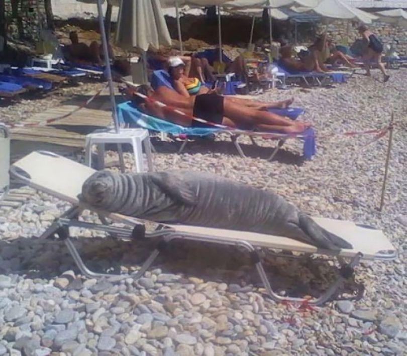 5cfa470f2eade interesting funny beach 47 5b6d3924c9c0d  700 - Coisas interessantes que as pessoas encontraram na praia