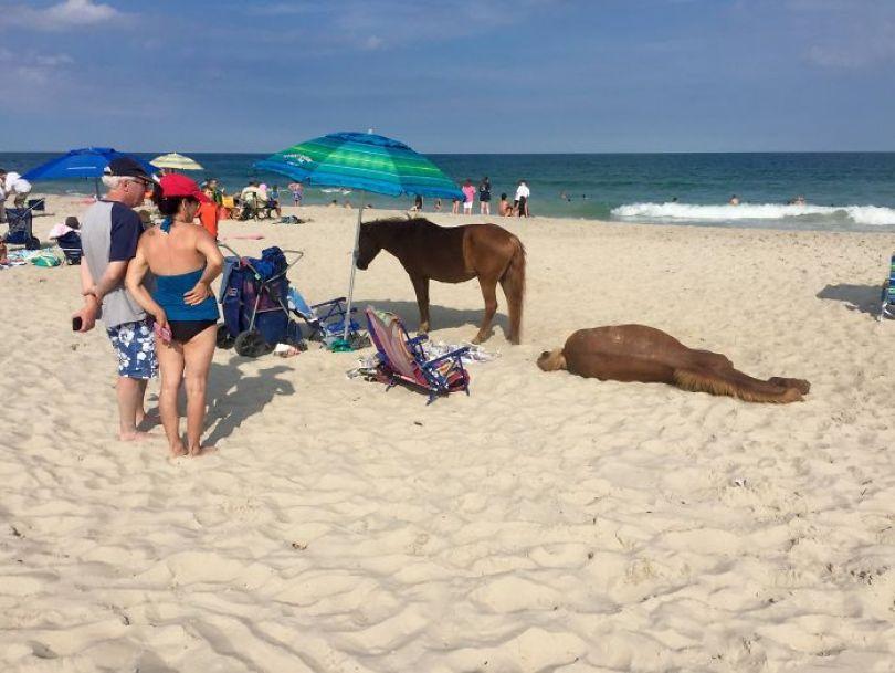 5cfa47114dad3 5b6d4fb193f3c 0mjJ9 iybIq1AkOryi 16Yg0FhJflr3YBDICTWbl5ag  700 - Coisas interessantes que as pessoas encontraram na praia