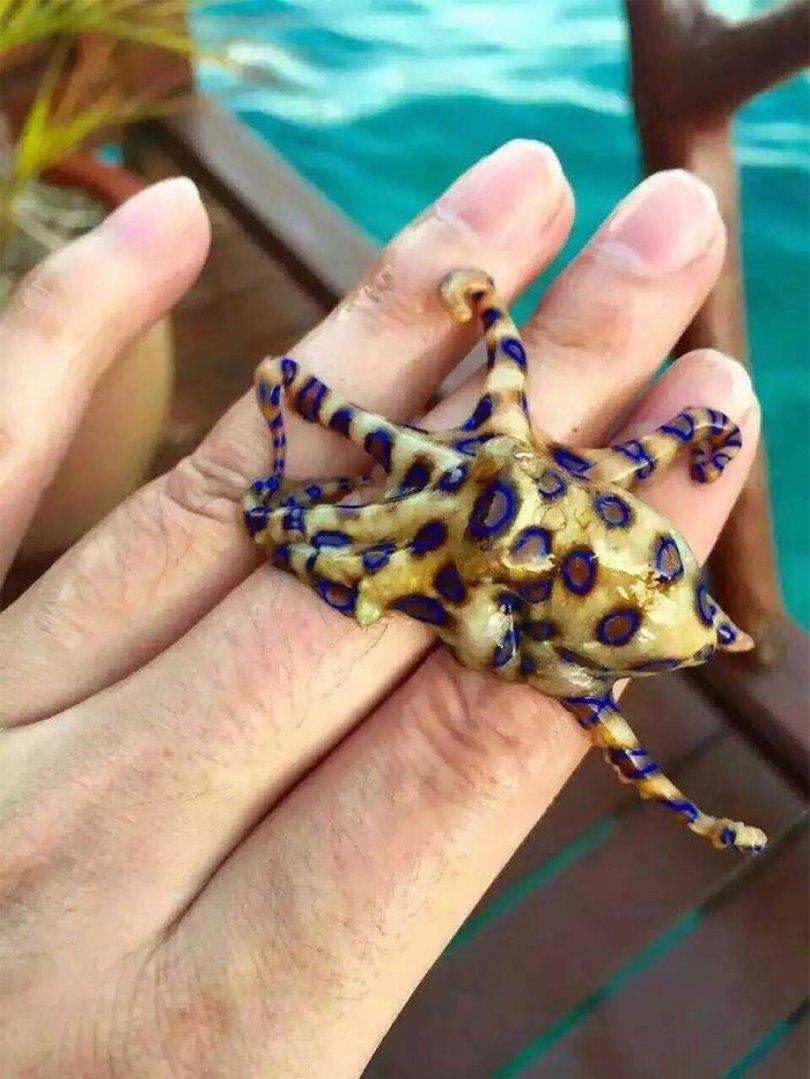 5d3020e46b6ec australia scary nature animals 30 5d2d835f50461  700 - 40 Fotos que provam que a Australia não é para qualquer um