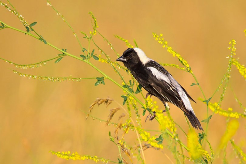 audubon photography awards 2019 winners 2 - Os vencedores dos prêmios Audubon Bird Photography 2019 foram anunciados