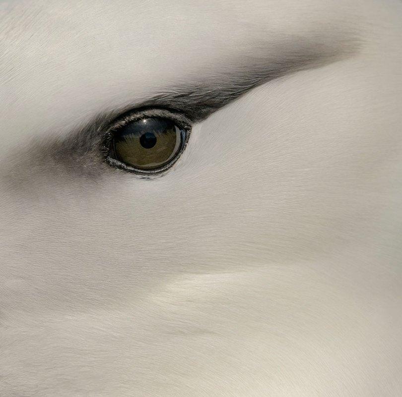 audubon photography awards 2019 winners 8 - Os vencedores dos prêmios Audubon Bird Photography 2019 foram anunciados