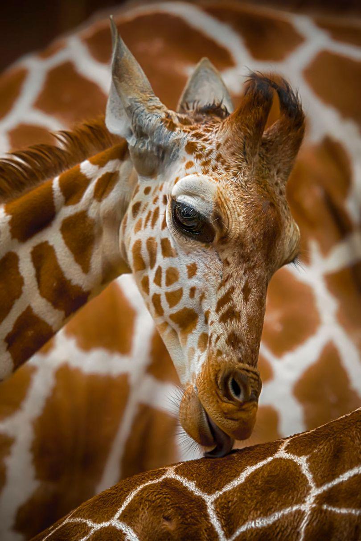 5d56596d536e9 Love Colognes Zoo Germany arosenthal ARosenthalAGORA images 5d51819671008  880 - 40 fotos apaixonantes e interessantes sobre o Amor