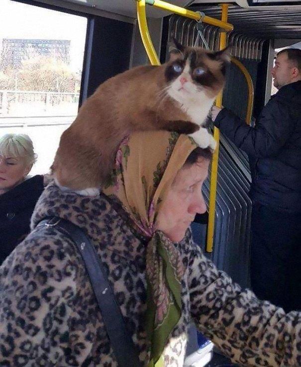 5dc3d4b8d51fa humans of trolleybuses 324 5dc28873d20c8  700 - Conta do Instagram compartilha as coisas mais estranhas do transporte público