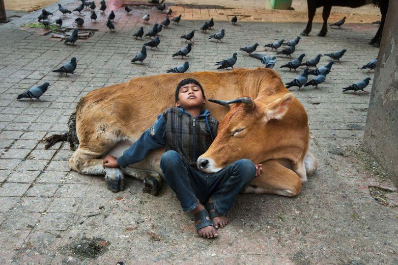 5dce5d21b3873 x 5dc9da2b57c5a  880 - 40 fotografias de Steve McCurry que exploram a relação entre humanos e animais