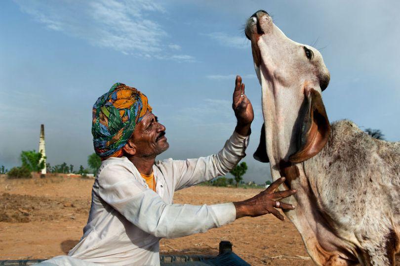5dce5d2497290 x 5dc9d41053148  880 - 40 fotografias de Steve McCurry que exploram a relação entre humanos e animais
