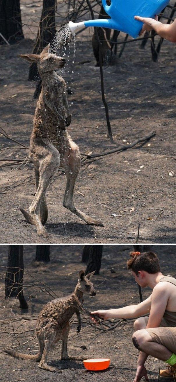 5e144300ec5f6 the boy helps the stricken kangaroo 111 5e142cbbd0880  700 - Internet compatilha 50 fotos que revelam as queimadas na Austrália