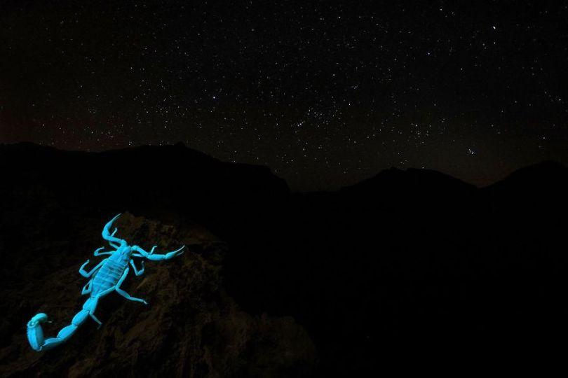 5eb2623de0aae gdt nature photographer of the year 2020 5eb114541350b  880 - As melhores fotografias da Natureza - Concurso GDT 2020
