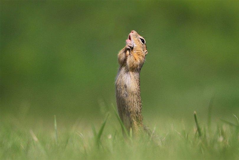 5f5b7bb52334c 35 5f5a20c204c6d  880 - As fotos mais fofas e engraçadas de 2020 do mundo animal!
