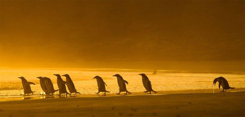 5f5b7bb5c546f 7 5f5a16b1d9ddc  880 - As fotos mais fofas e engraçadas de 2020 do mundo animal!