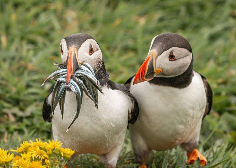 5f5b7bb5d15e3 19 5f5a1c308a322  880 - As fotos mais fofas e engraçadas de 2020 do mundo animal!