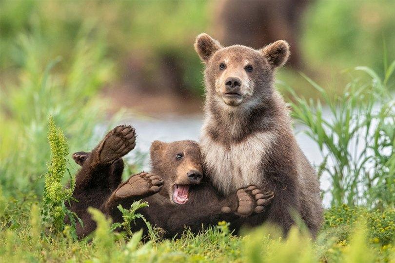 5f5b7bb9ee0e8 42 5f5a22874e37d  880 - As fotos mais fofas e engraçadas de 2020 do mundo animal!