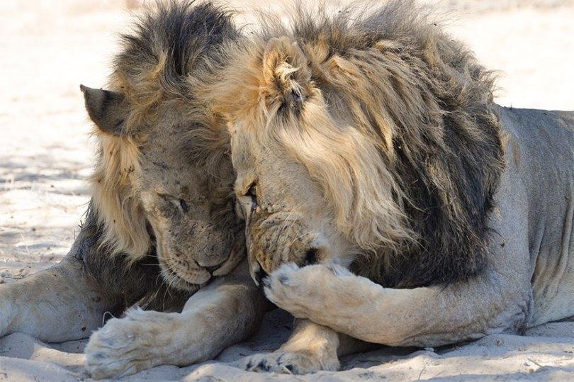 5f5b7bbbb9b2a 4 5f5a1626357d3  880 - As fotos mais fofas e engraçadas de 2020 do mundo animal!