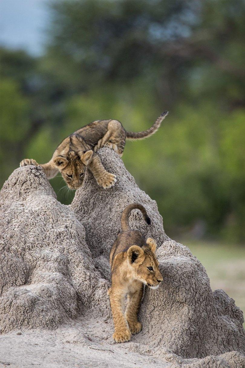 5f5b7bc42f812 31 5f5a22f3094d1  880 - As fotos mais fofas e engraçadas de 2020 do mundo animal!