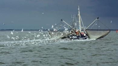 Photo of تقييم إدارة المخاطر لدى العاملين بقطاع الصيد البحري في محافظة غزة- فلسطين
