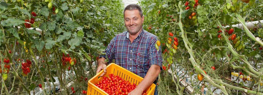 Gardeners Pride Beetgum
