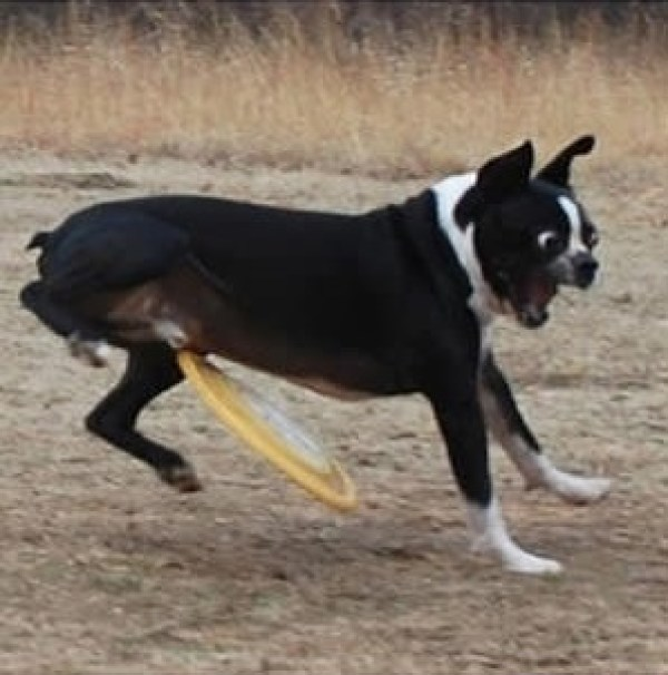 golpe del frisbee