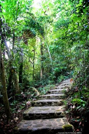 Early on the jungle hike