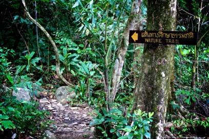Beginning of the nature walk, Khao Lak-Lam Ru national park