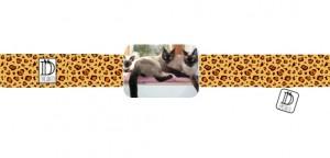 pulsera marco mascota gato