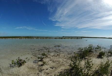 Reading Mangrove Flats