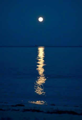 Bonefish on Full Moon