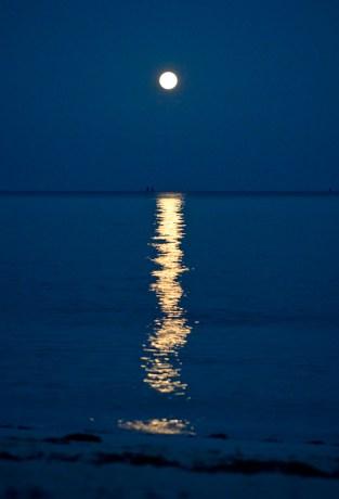 Bonefish on Full Moon