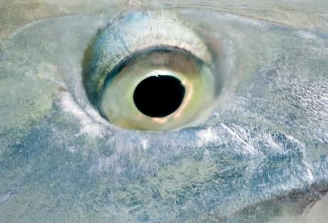 Bonefish Flies by Idylwilde