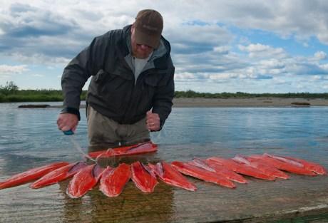 Wild Salmon Are Better