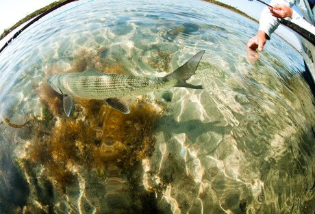 Bonefish Release by Louis Cahill Photography