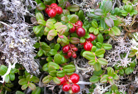 Flora of Alaska 3