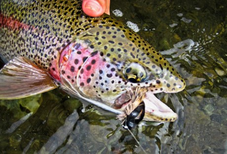 Alaska Trout Fishing Pictures