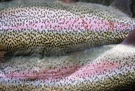 Expert Trout Rig Roundup