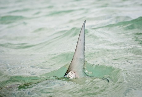 Bonefish Tailing by Louis Cahill Photography